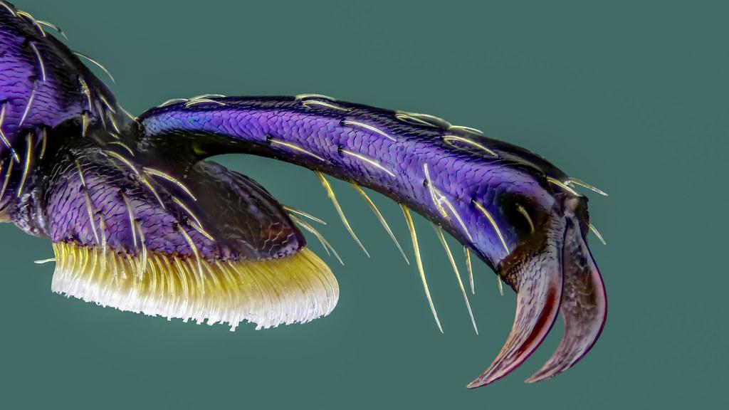 Chrysomelidae, Blattkäfer