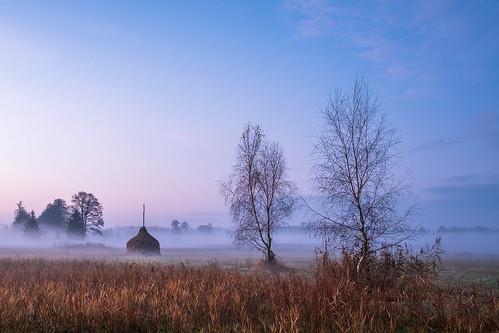 landscape nature mazovia poland trees meadow field sunrise morning dawn autumn fog mist