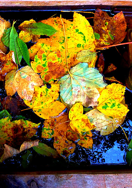 Floating Thru Fall
