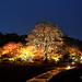 20191118-53-Okayama Korakoen at night