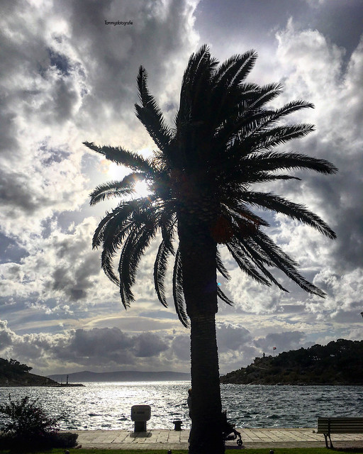 Palmtree in the storm