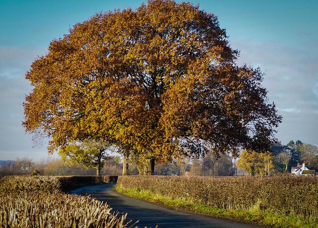 Cheshire Oaks - Holehouse Lane, Whiteley Green