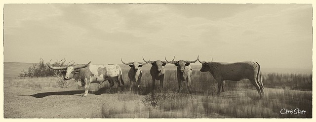 Cattle Co.