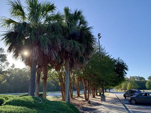 vacation travel southcarolina palmtrees sunrise