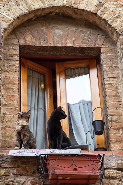 una coppia alla finestra