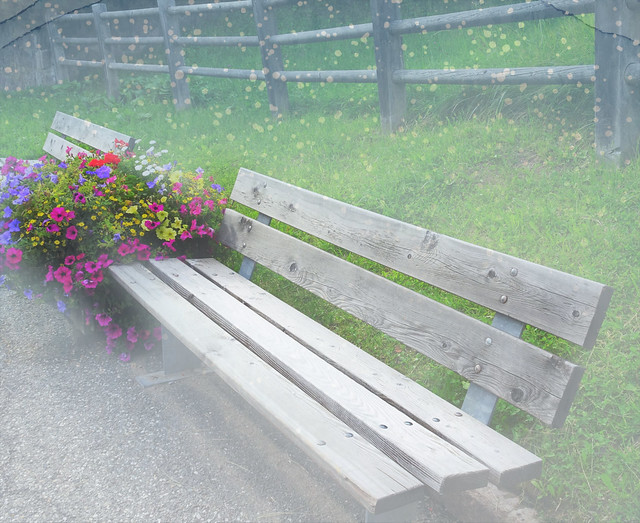 Bench and flowers  (Italy)