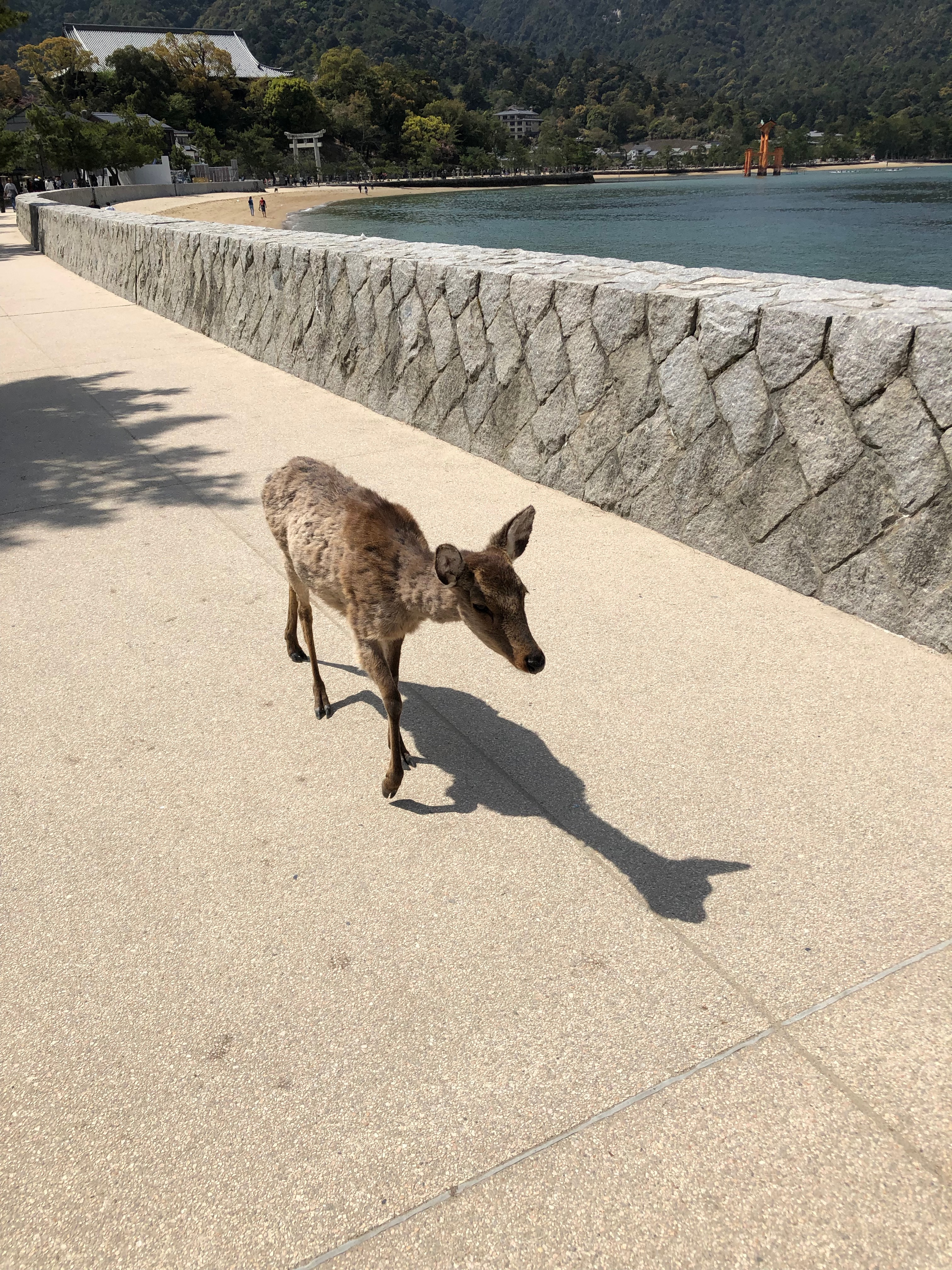 hiroshima deer