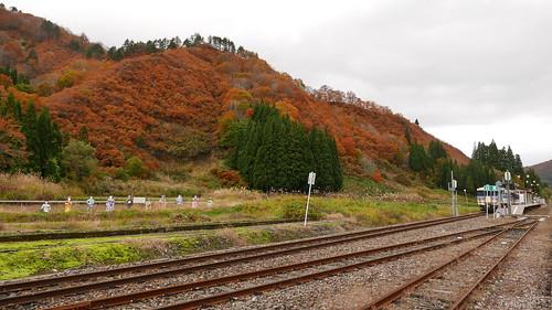 秋の紅葉 只見駅裏の山が一斉に色づく これでも見頃後半