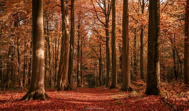 Autumn colors 9
