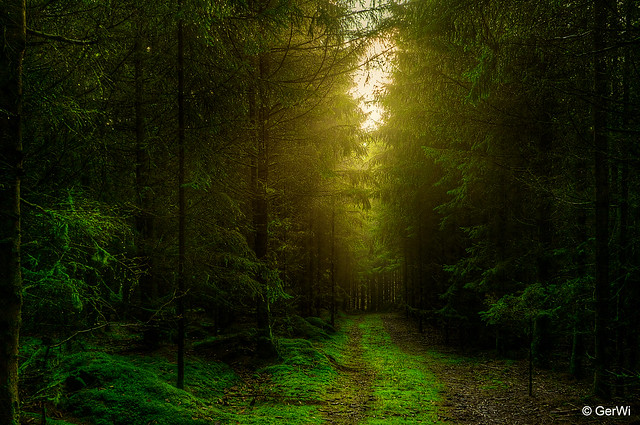Mitten im Wald