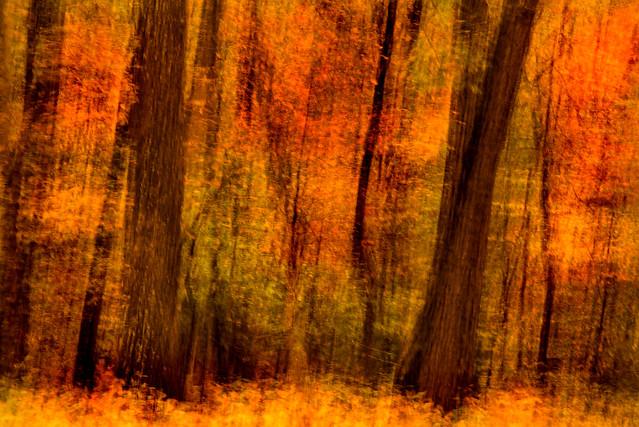 Impressionistic Forest 3-0 F LR 10-29-19 J045
