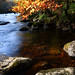 Leaf / Water / Motion