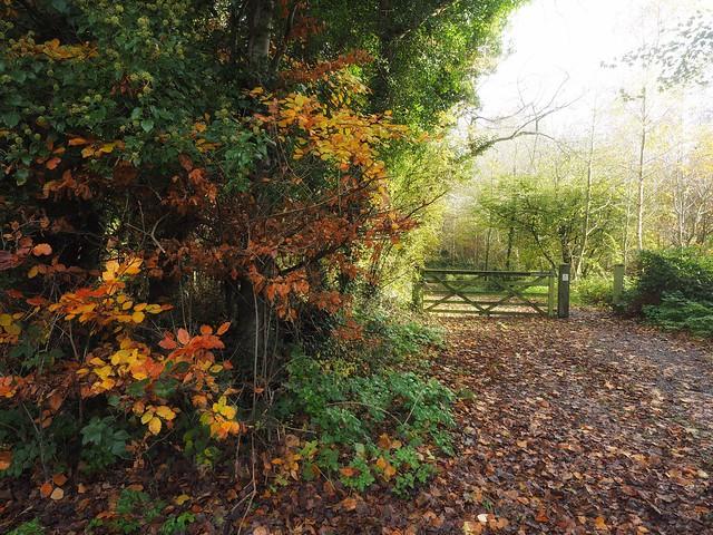 Autumn in Strangford