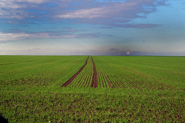 Perspective agricole