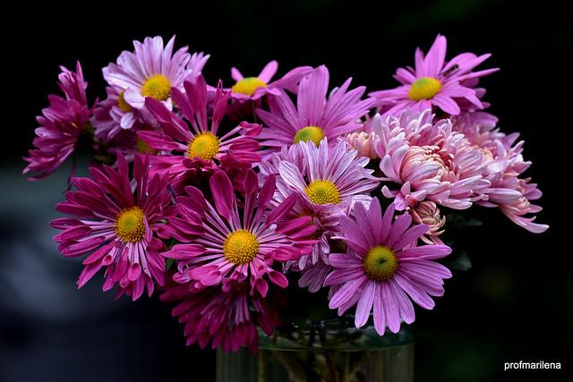 DSC_1026  my November chrysanthemums, still life