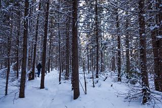 Forêt ornithologique d'Askikwaj - Québec Canada