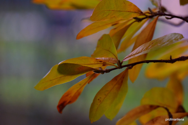 DSC_1144 softly autumn
