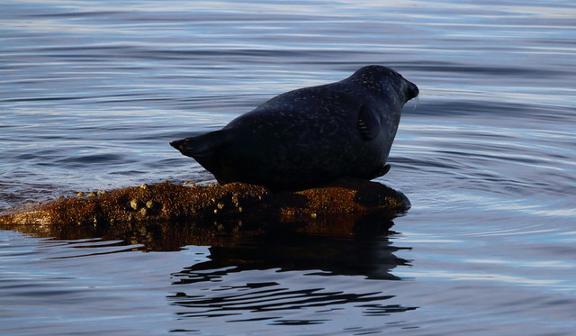 Another Skelmorlie seal .