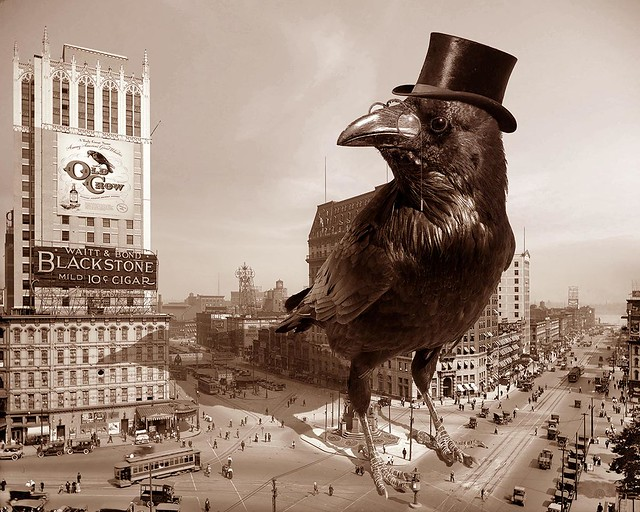 Ravens are a bit larger than crows