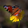 Butterfly by Geeth67