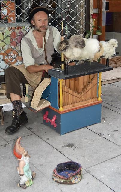 Hurdy gurdy man, chickens,