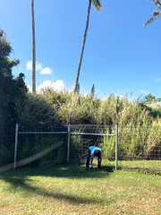 Hawaii Electric Light at the Hawaii Wildlife Center — Oct. 5, 2019: Sharon Suzuki, our president of Maui County and Hawaii Island Utilities was spotted getting her hands dirty pulling weeds.