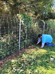 Hawaii Electric Light at the Hawaii Wildlife Center — Oct. 5, 2019: Volunteers cleared weeds, vines and overgrowth, which will help deter predators from entering the yards.