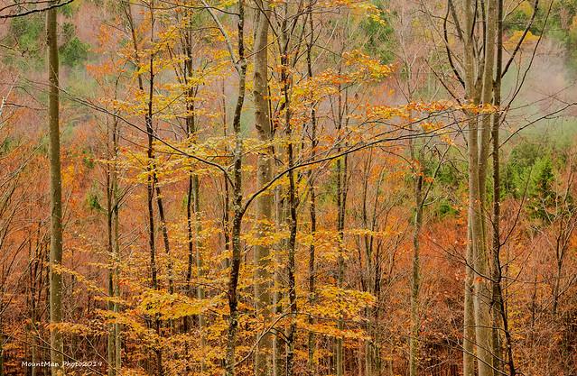 Jesen u šumama oko Klane, studeni 2019. (6)