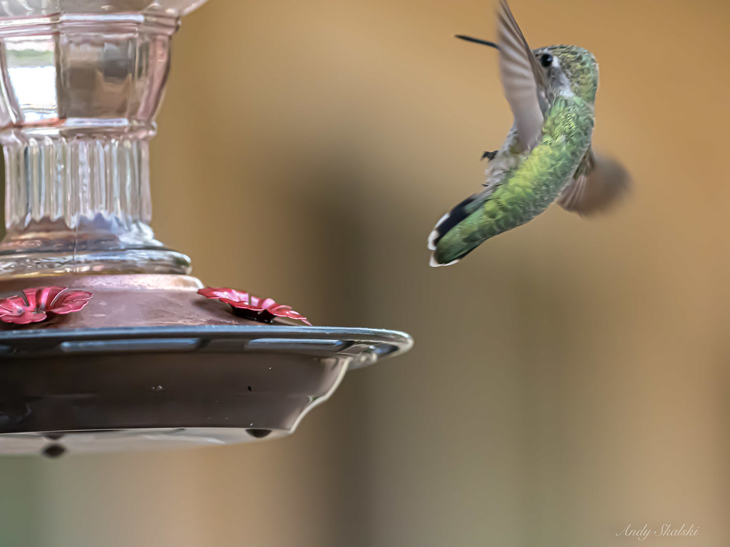 Hummingbird Departure 3 (in explore)