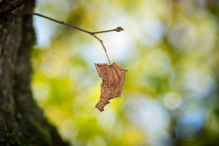 don´t leaf me alone 1/3