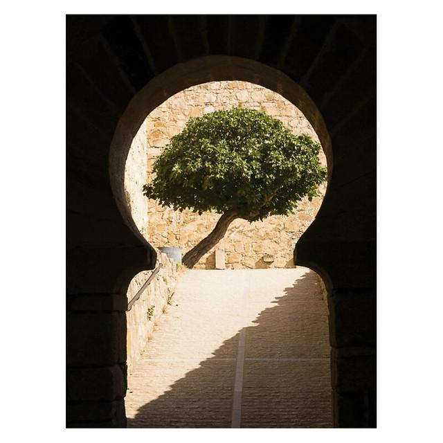 Tree, Castillo de Trujillo, Extremadura