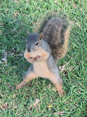 Tough Squirrel