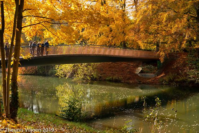 Autumn colours in Cottbus - X