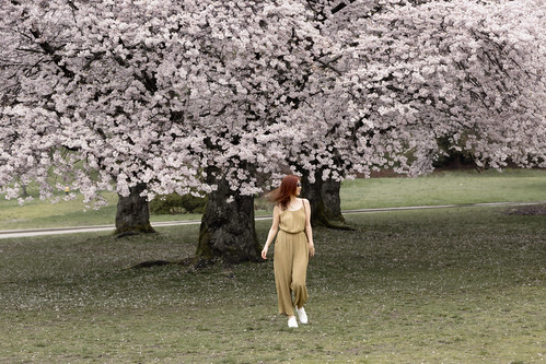 Once upon a time - cherry blossoms