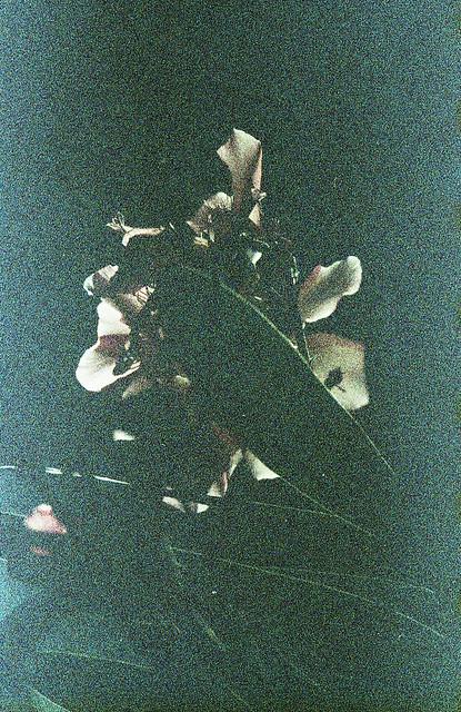 flower dissolves away