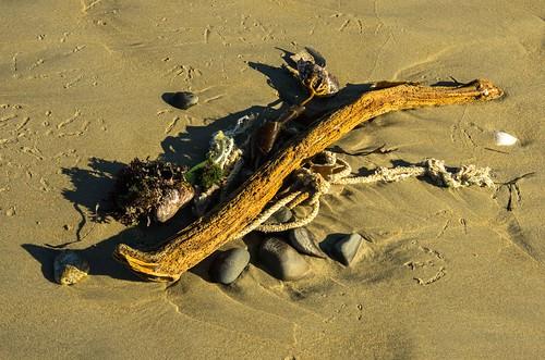 Beach Finds 5