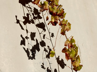 Shadows of Autumn Leaves-3