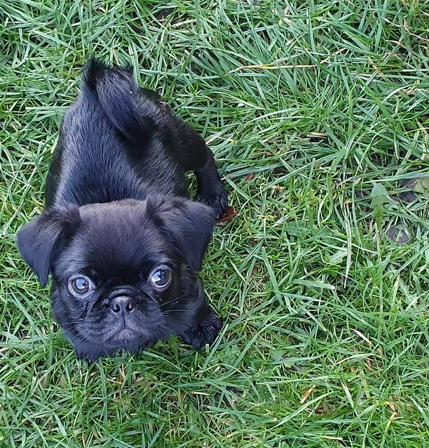 Meet Stan. Our 9 week old boy...