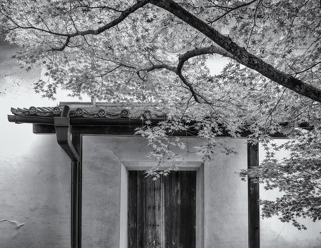 Leafy doorway