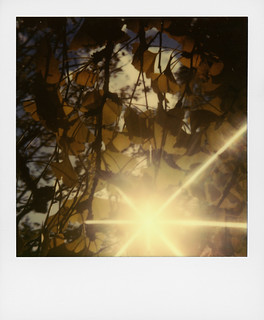 When the sun plays with my gingko biloba | by @necDOT