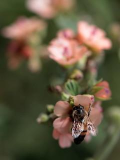 Macro con abeja y florcitas