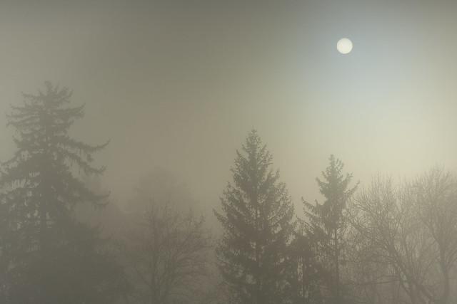 Nebel im Schlosspark Ambras