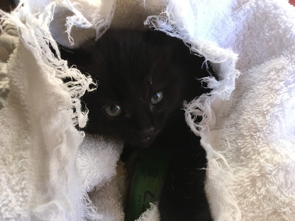 Rescued Kitten 2019/10/13