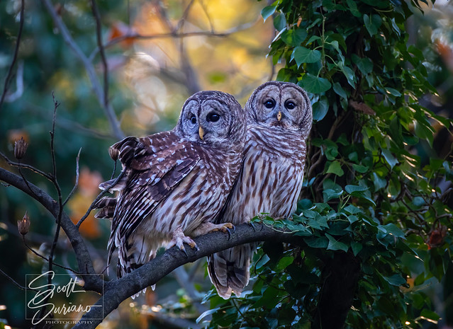 """A pair of Hooters for """"Two-for-Tuesday's""""..."""