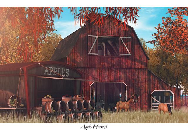 • Apple Harvest •