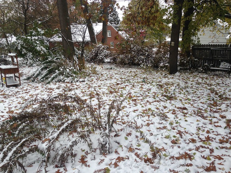 our backyard - leaf-covered snow cover
