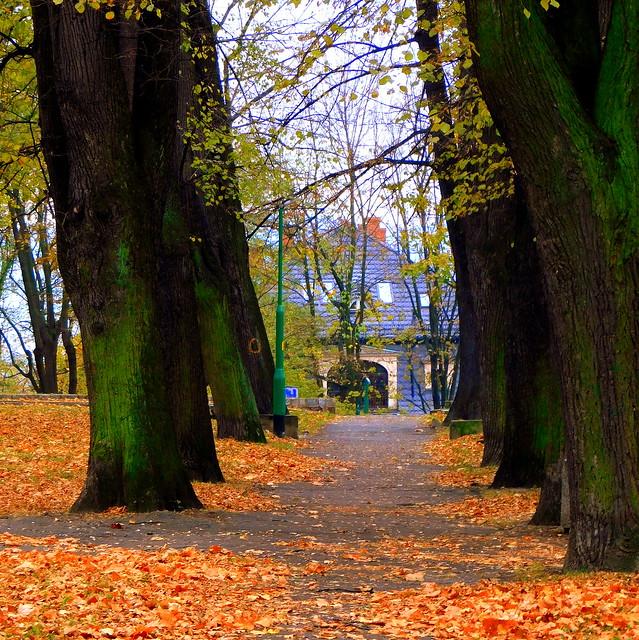 Jesień w parku.