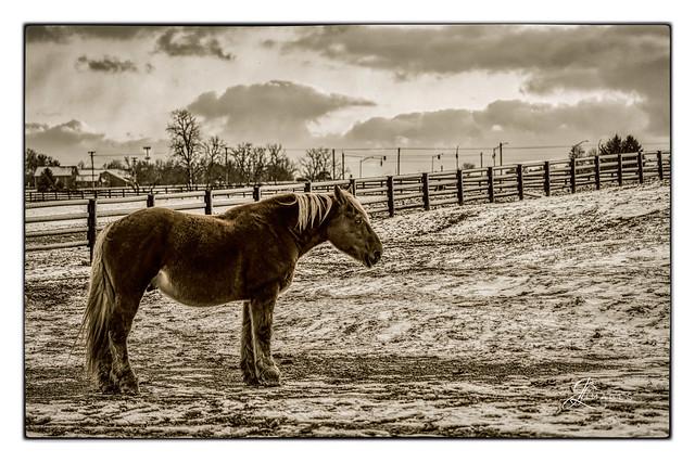 Horse in B/W