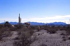 Mexico Route 2 near Sonoita