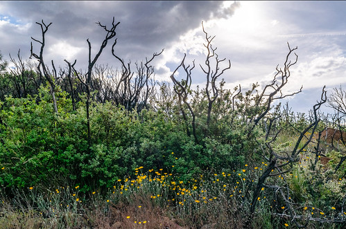 _DSC1945-p-after-the-wildfires-Tubbs-Atlas